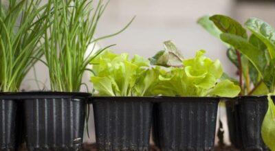 Horta em casa: ideias incríveis para cultivar temperos e hortaliças
