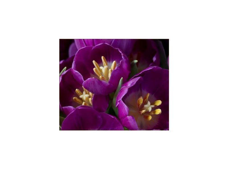"""Quadro de fotografia de flor por R$834 na <a href=""""http://www.quatroarteemparede.com.br/por-tamanho/grande-a-partir-60cm/quadro-alex-bover-colec-o-flowers-12.html"""" target=""""_blank"""">Quatro Arte em Parede</a>"""