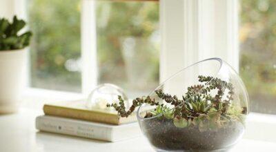 Plantas pequenas e bonitas para cultivar sem jardim