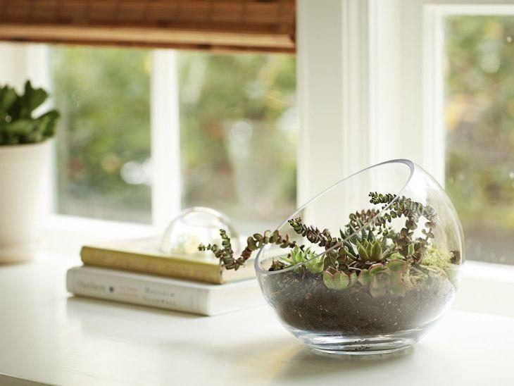 Foto: Reprodução / Gardenista