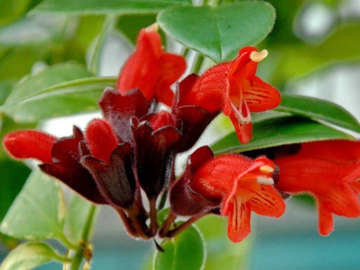 Foto: Reprodução / World of Flowering Plants