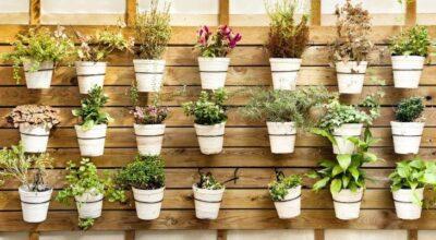 Como ter uma horta vertical em casa