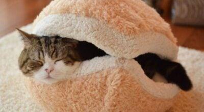 30 móveis cheios de estilo para seu gato brincar em casa