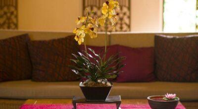 Orquídeas para iniciantes: saiba como escolher e cultivá-las em sua casa