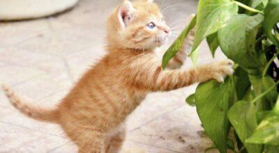 25 plantas tóxicas para evitar se você tiver animais em casa