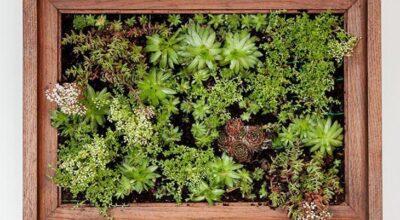 Quer ter um jardim suspenso de suculentas? Faça você mesma em casa