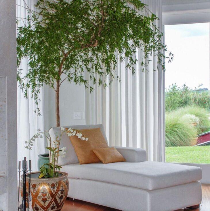 Conheça todas as  características do bambu mossô