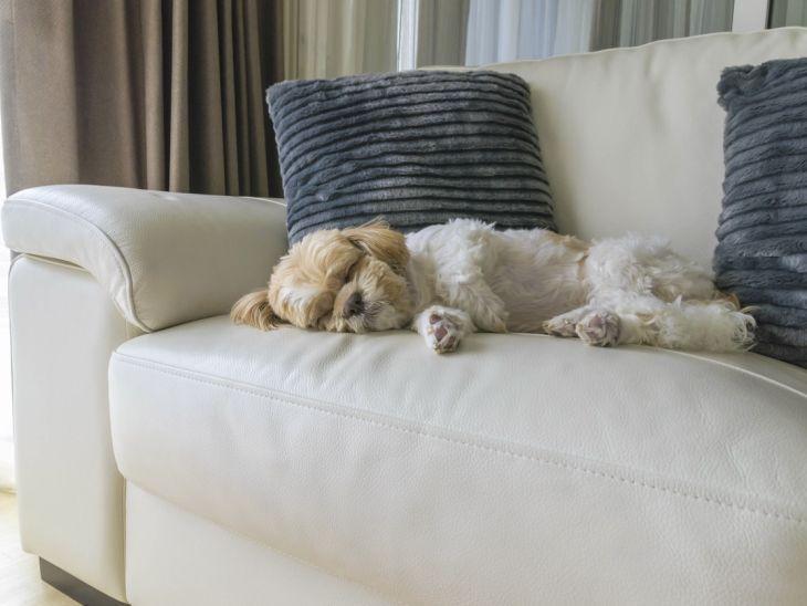 8 dicas e receitas caseiras para tirar o cheiro de cachorro de casa