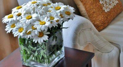 Renove a casa: 10 dicas para dar um up na decoração sem gastar muito