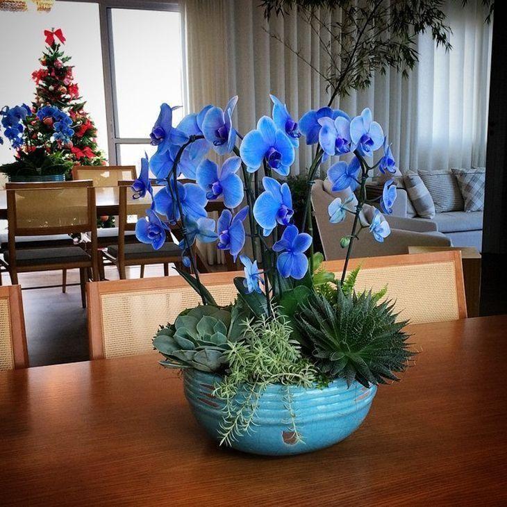 orqu dea azul como cultivar e usar a planta na decora o