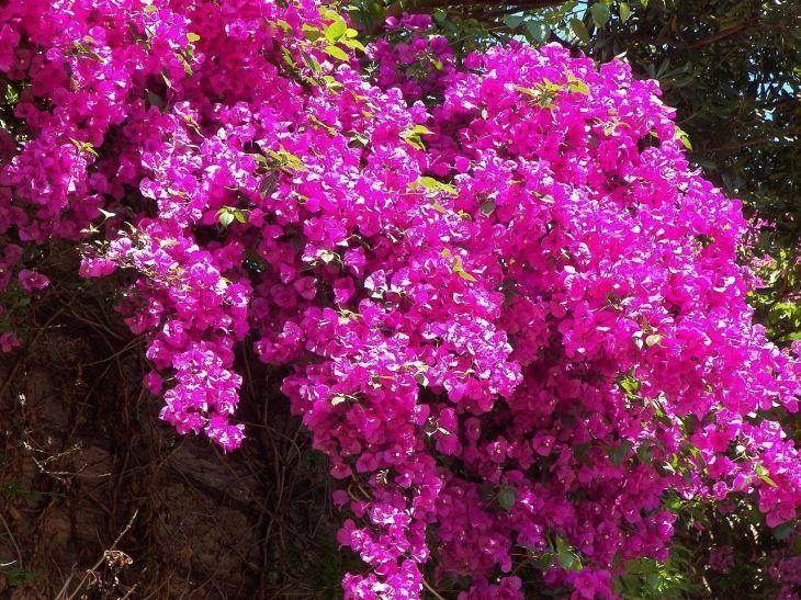 Cerca viva privacidade e contato com a natureza para um for Fiori rampicanti da giardino