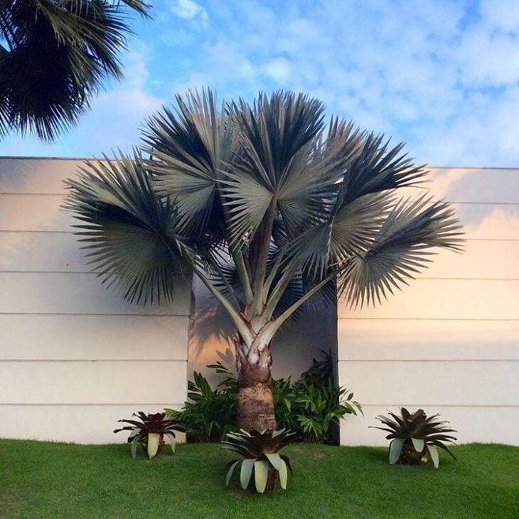 Resultado de imagem para palmeiras azul