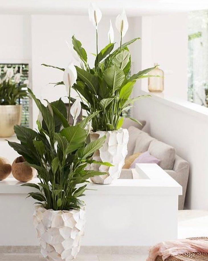 L rio da paz traga a natureza para dentro de seu lar - Plantas pequenas de interior ...