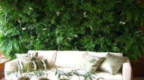 Lírio da paz: traga a natureza para dentro de seu lar