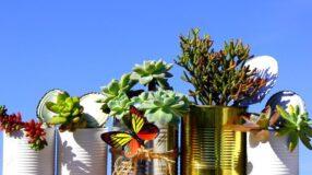 Suculentas: conheça algumas espécies e como usá-las na decoração