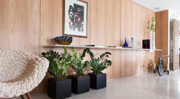 Decoração de interiores: plantas que não precisam de sol