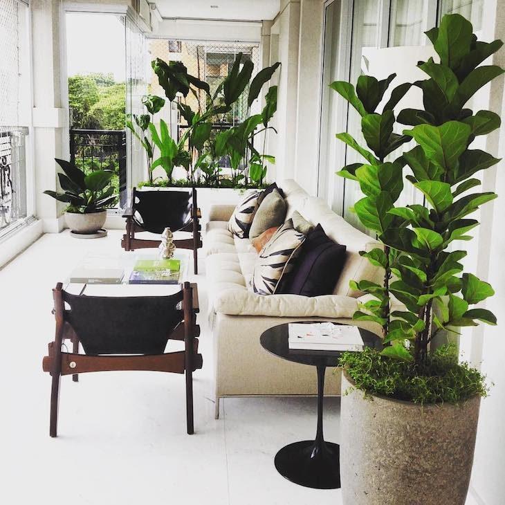 Decora o de interiores plantas que n o precisam de sol for Arbustos para interiores