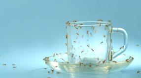 Formigas: 22 truques caseiros para combater e prevenir o surgimento