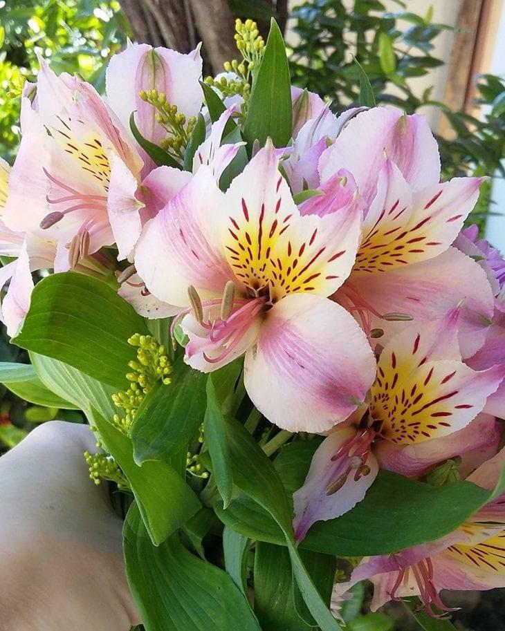Flores Para Decorar Fotos