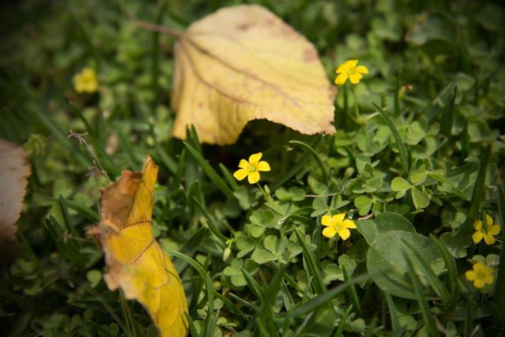 Tipos De Flores 81 Espécies Para Decorar Sua Casa Ou Jardim Fotos