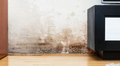 Como tirar o mofo da parede: de uma simples limpeza à reforma