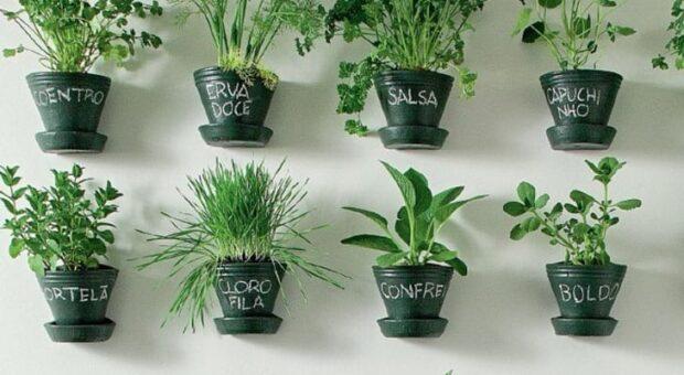 Horta em apartamento: como fazer, o que plantar, passo a passo e fotos