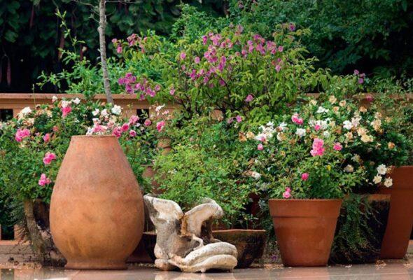 Flores para jardim: 100 espécies mais comuns para embelezar sua casa