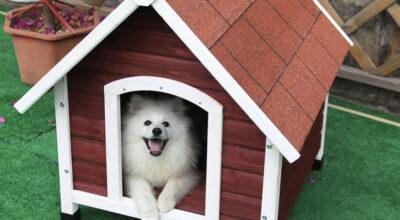 40 modelos de casinhas de madeira para seu cachorro ter ainda mais conforto