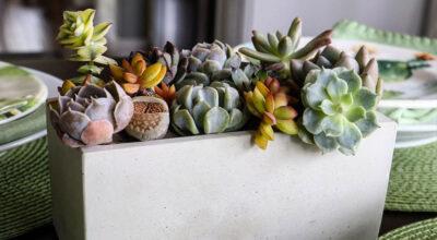 Como fazer vaso de cimento: modelos passo a passo e 20 lindas inspirações