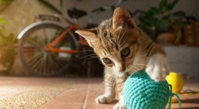 Brinquedos para gatos: 45 ideias incríveis para entreter o seu pet