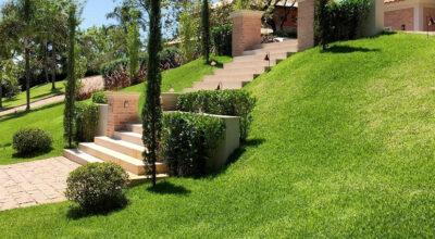 Como plantar e cultivar grama: passo a passo e 5 dicas valiosas