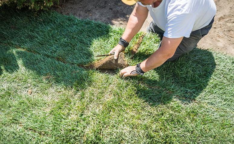 Como Plantar Grama Passo A Passo E 5 Dicas Para Mante La Sempre Verdinha