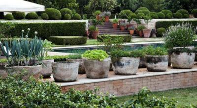 Plantas fáceis de cuidar: 40 espécies práticas para cultivar em casa