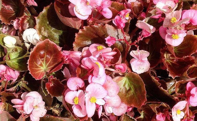 Plantas Fáceis De Cuidar 40 Espécies Práticas Para Cultivar