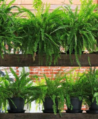 Samambaia: como cuidar, tipos e 70 ideias de decoração com a planta