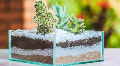Mini jardim: 30 ideias e tutoriais para montar paisagens em miniatura