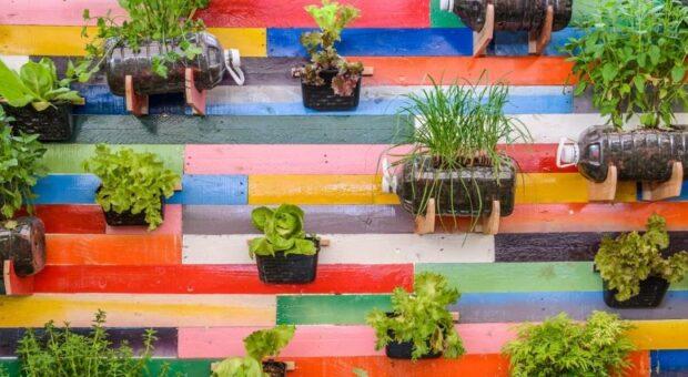 Horta suspensa: 35 ideias para ter alimento orgânico em casa