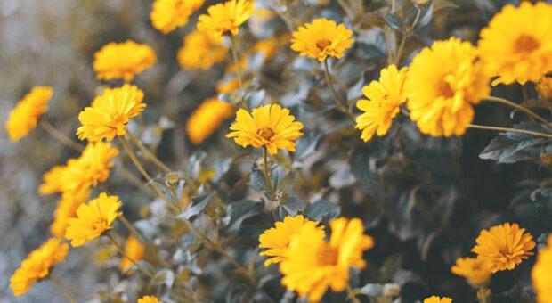 Flores amarelas: 10 espécies para iluminar e colorir o seu jardim