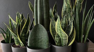 Plantas de sombra: cuidados e modelos para cultivar
