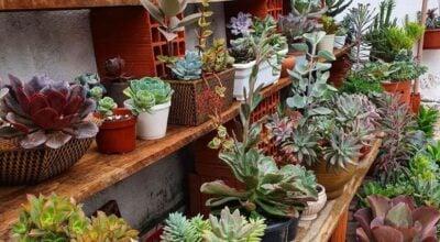Tipos de suculentas: conheça 10 espécies dessa planta