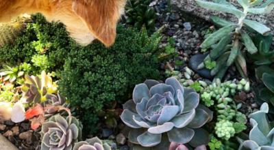 Jardim de suculentas: tutoriais e 80 ambientes incríveis para te inspirar