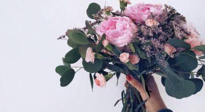 """Peônias: conheça os encantos das famosas """"rosas sem espinhos"""""""