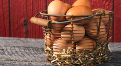 Porta-ovos: aprenda a fazer esse objeto funcional e decorativo