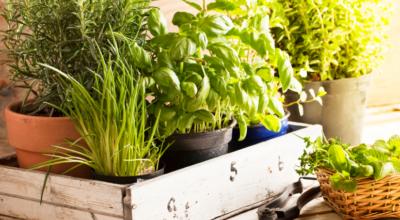 13 temperos para plantar em casa e dar mais sabor ao seu dia a dia