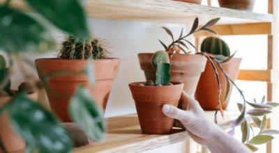 Prateleira para plantas: 25 ideias e tutoriais para encher a vida de verde