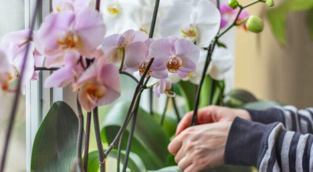 Como cuidar de orquídeas: 12 dicas para os apaixonados por flores