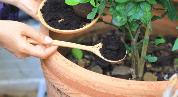 8 tipos de adubo caseiro para fazer e ter plantas saudáveis