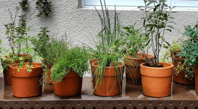60 ideias de horta em vasos que vão facilitar o seu dia a dia